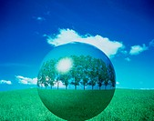 Trees floating in sphere