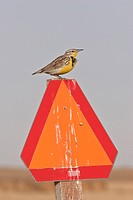 canada, meadowlark, saskatchewan, sign, orange, western
