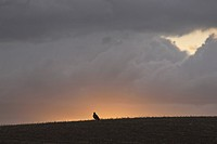 canada, ridge, saskatchewan, scenic, sunset, hawk