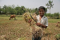 harvested, people, boy, bangladesh, person, food