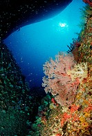 Cave with Soft Corals, Similan Islands, Thailand