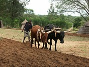 plow, person, ploughing, farmer, zambia, people