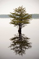 A tree and its reflection in a lake