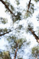 Low angle view of trees, defocused