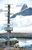 Directional sign and penguin