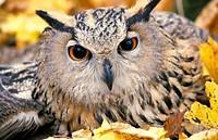 bird, nature, one, outdoors