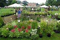 NURSERY PLANT STANDS LOOKING TO THE HOUSE. THE COTTESBROOKE HALL PLANT FINDERS FAIR NORTHAMPTONSHIRE