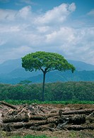 Costa Rica, lone tree, de_forested area