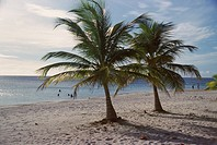 Honduras, Bay Islands, Roatan, palm trees