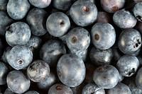 BLUEBERRIES VACCINIUM CORYMBOSUM