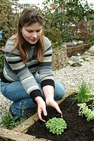 PLANTING OF BASIL. PERSON METTANT LE TERREAU. PLANTS AROMATIC SCENTED FRAGRANTS. GARDEN MAP