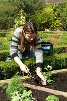 PLANTING OF LA VERVEIN VERBENA OFFICINALIS. PERSON METTANT LE TERREAU. PLANTS AROMATIC SCENTED FRAGRANTS. GARDEN MAP