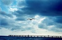Seagull flying over long pier