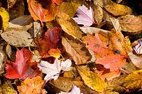 Autumn leaves on the forest floor, Background texture