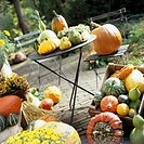 Various squashes and pumpkins in boxes and on table and chair