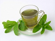 Mint infusion Mentha sp