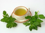 Dwaf nettle infusion Urtica urens