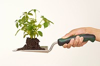 Person holding trowel with seedling