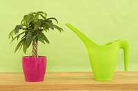 Watering can and indoor plant