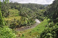 near Ubud (Bali, Indonesia): the Ayung river, by the Sayan paddies