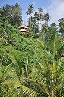 near Ubud (Bali, Indonesia): bungalows by the Sayan paddies