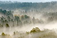 Forest landscape, Sweden.