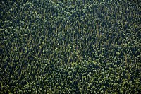 Aerial view of a forest, Sweden.