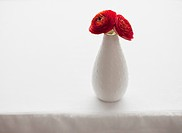 Red ranunculus in vase on table