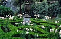 THE KNOT GARDEN WITH KNEE_HIGH BOX HEDGING AND WHITE LILIUM REGALE IN SARAH´S GARDEN AT TRUMPETER´S HOUSE