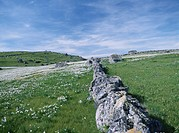 A Row of Rocks in a Grassy Field With White Flowers. France