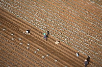 Aerial photograph of workers in a plowed field in the Sharon