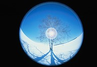 Fish_Eye Lens View of a Bare Tree in a Snowy Field. Biei, Hokkaido, Japan