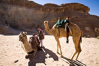 Photograph of camels in the Jordanian desert