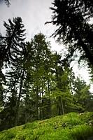 Scenery in tri_border region near Oberschwarzenberg, Muehlviertel, Upper Austria, Austria
