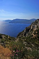 Landscape with flowers and sea at Corniche des Cretes, Calanques, Provence, France, Europe