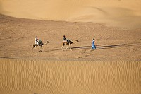 Berber and two camels crossing the sand dunes, Dunes de Juifs, desert near Zagora, Sahara, Morocco