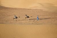 Berber and two camels crossing the sand dunes, Dunes de Juifs, desert near Zagora, Sahara, Morocco