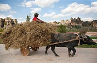 Water buffalo pulling cart with hay and farmer, karst formations in the background, Shilin, Yunnan, People´s Republic of China, Asia