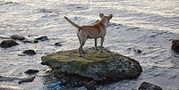 dog standing on stone at the sea