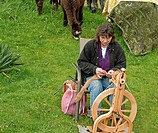 This rural woman is spinning on a spinning wheel alpaca fur into thread on her farm with her alpacas in the background She is very talented in her cra...