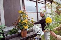 Senior ladies preparing a bunch of flowers for the church Ploermel France