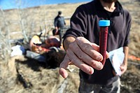 A blood sample from a harvested Bison in the Bridger_Teton.