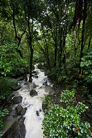 A small river flows through a dense tropical rainforest.