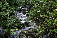 A small waterfall flows down a mountain in the rainforest.