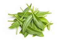 Sea aster leaves on white background