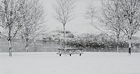 Park bench and trees beside a lake in a snow storm