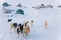 Dog Sledding into Tiniteqilaq, East Greenland