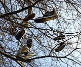 Shoes hanging in tree