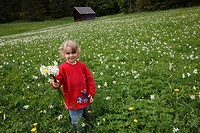 little girl on narcissus meadow