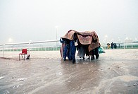 Racegoers shelter under a carpet as the rain pours down